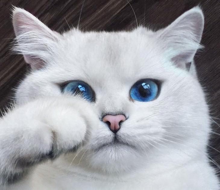beautiful cats