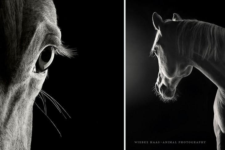 HORSES, WILD, PHOTOGRAPHY