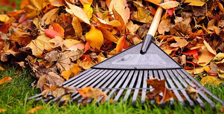 raking, leaves, autumn, lawnmower, grass, fall