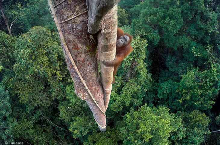 wildlife-photography-awards
