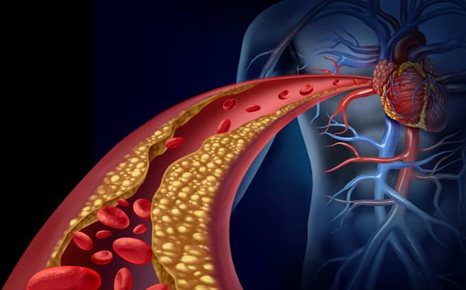 Quiz: Cuánto sabes sobre anatomía humana | Acertijos y Adivinanzas ...