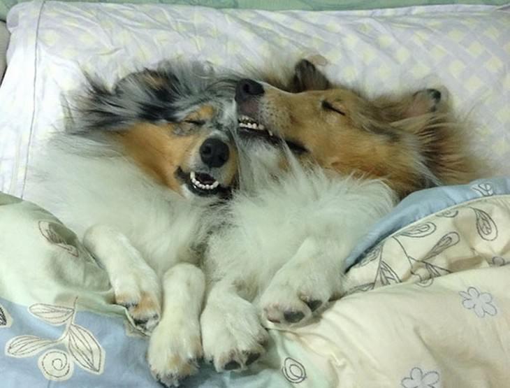sleepy dogs, cute