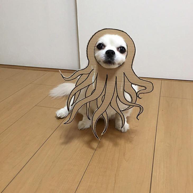 japan-dog