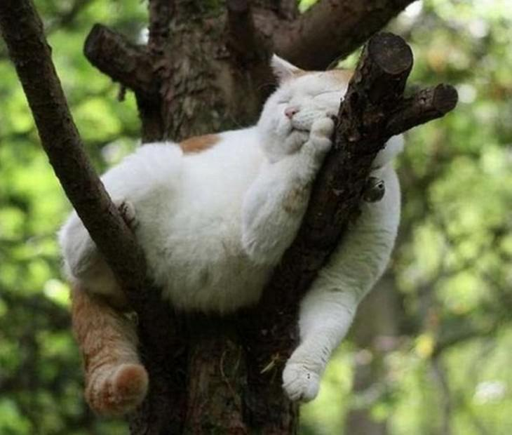 cats, sleeping, cute