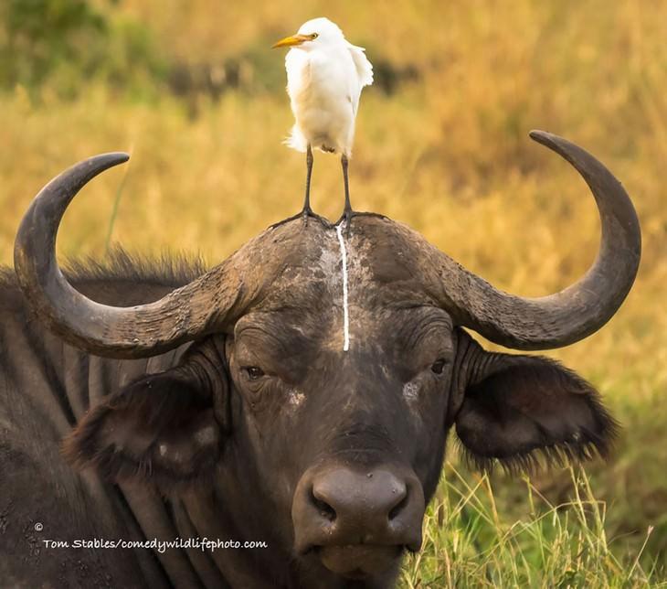 funny animals, comedy photos