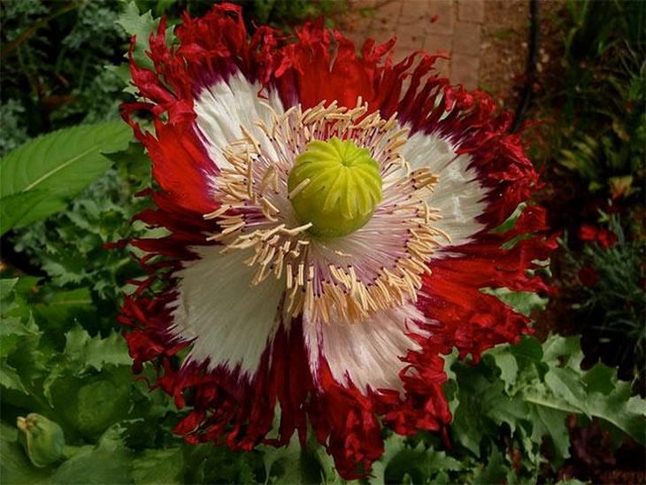flowers, beautiful
