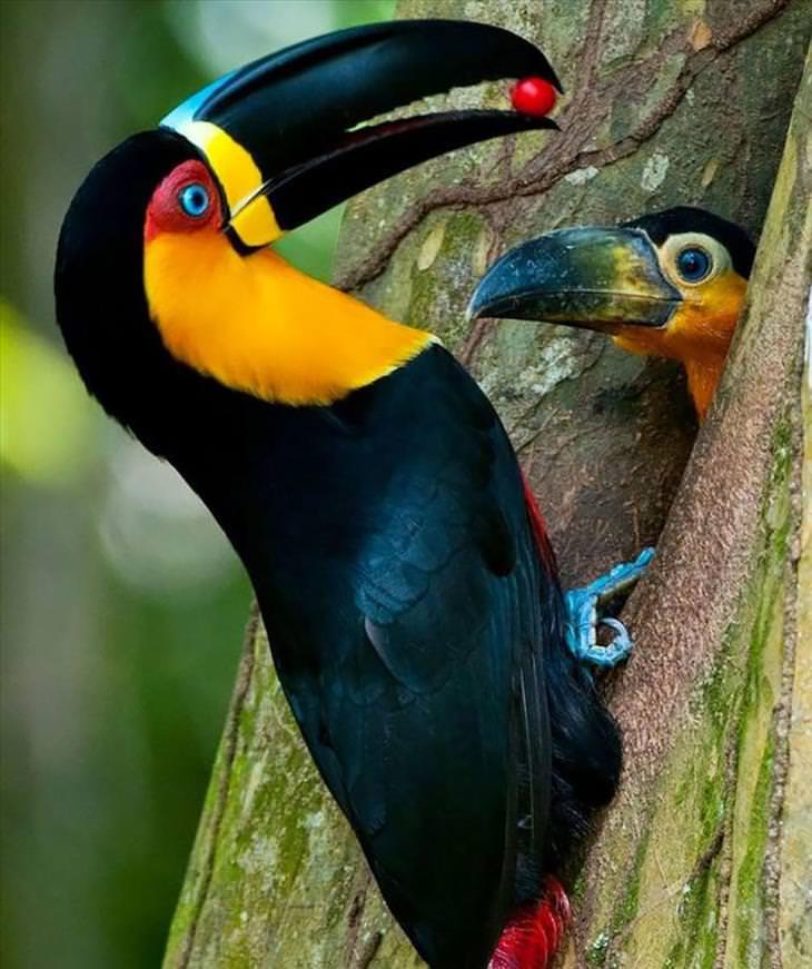 birds, parents