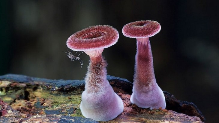 Mushrooms - Colorful - Wonderful - Photography