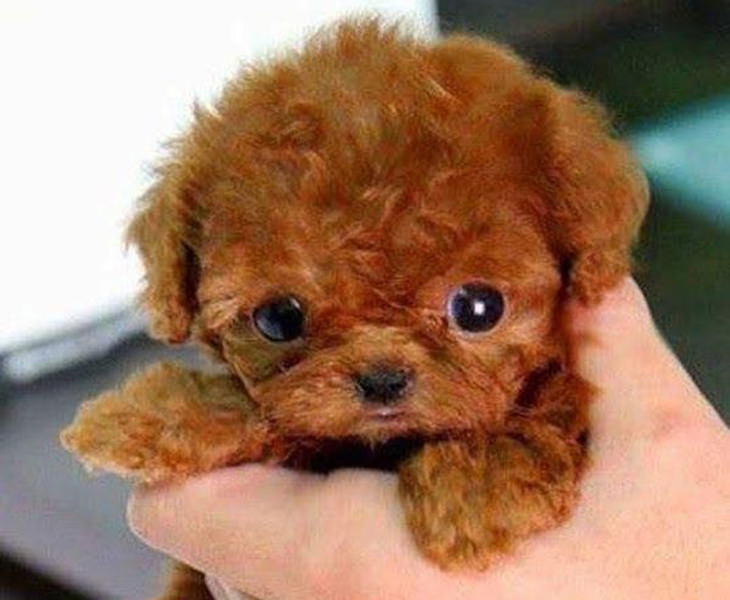Cutest Puppy In The World | www.pixshark.com - Images ...