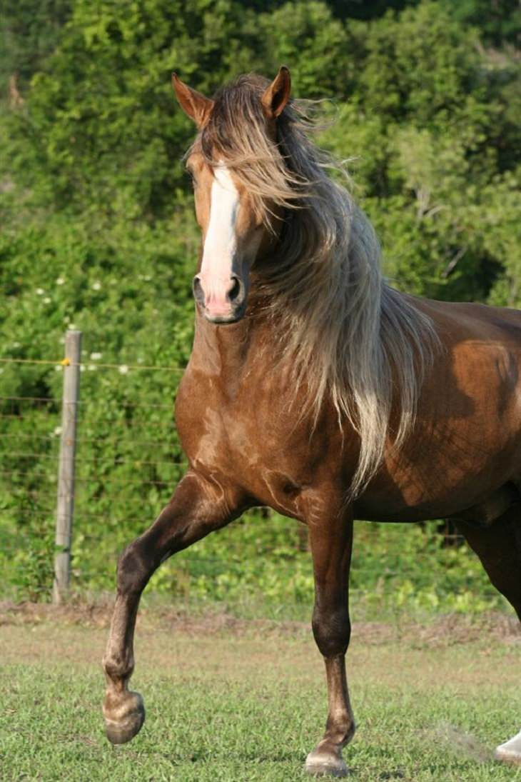 Horses - Flowing Hair - Beautiful
