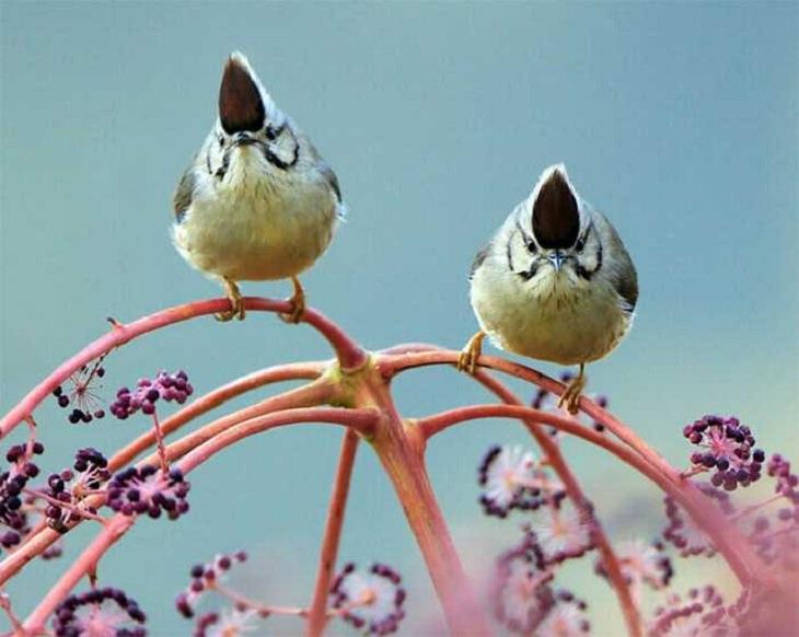 Wildlife - Birds - Taiwan - Art - Photography