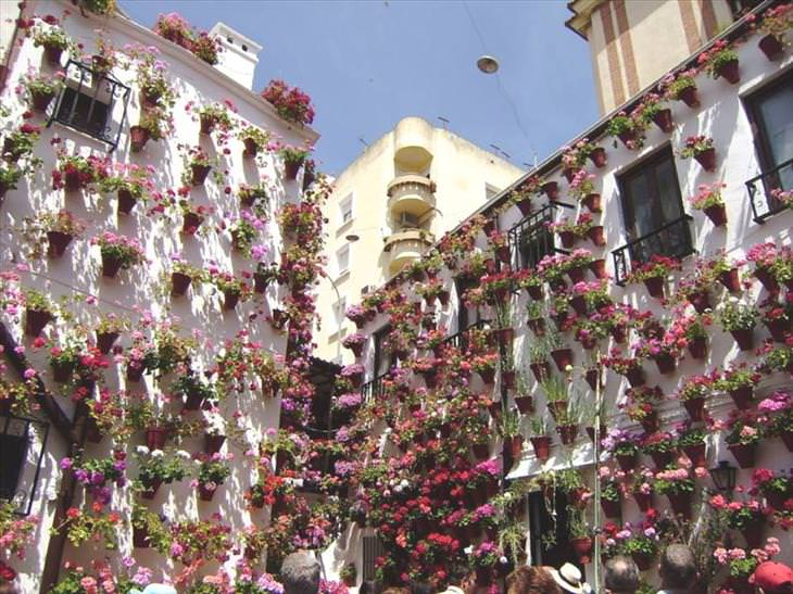 Cordoba, flowers, city