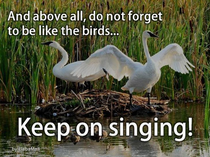 birds-about-life