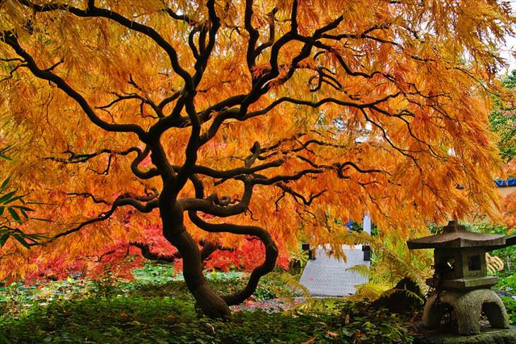 trees, beautiful