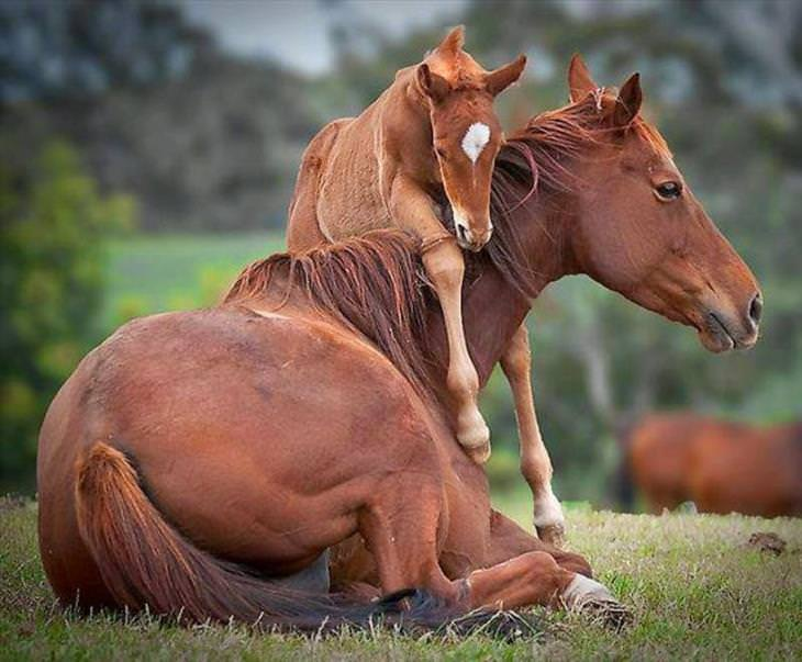 Mother & Baby Animals