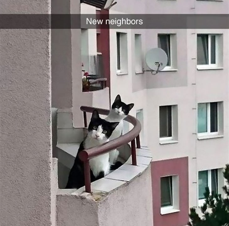 cats, funny, snapchat, cute