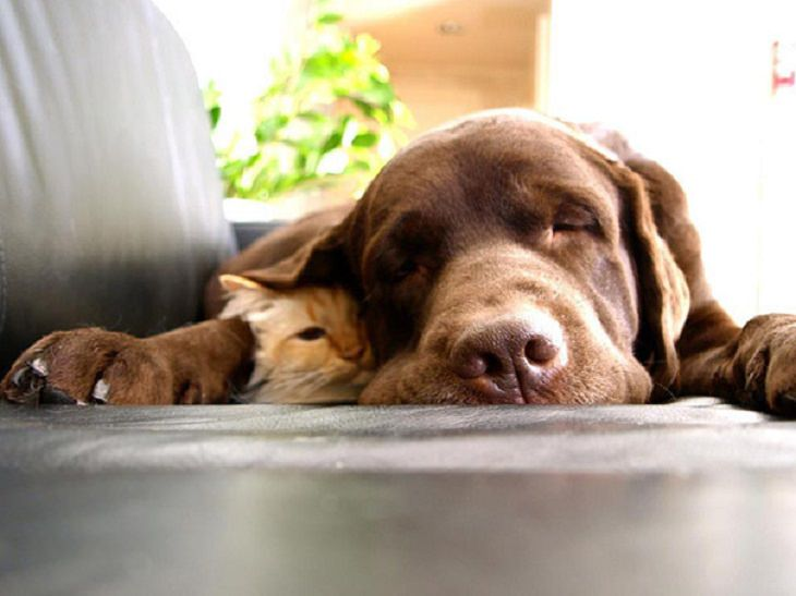 Cats - Dogs - Cute - Photos - Friendship