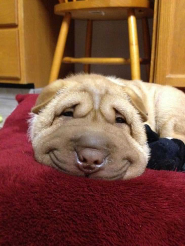 dogs that smile