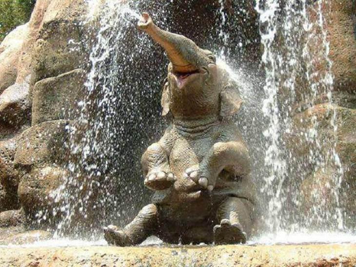elephants, beautiful, adorable