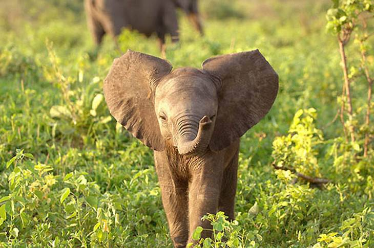 elephants the world s friendliest giants cute overload babamail