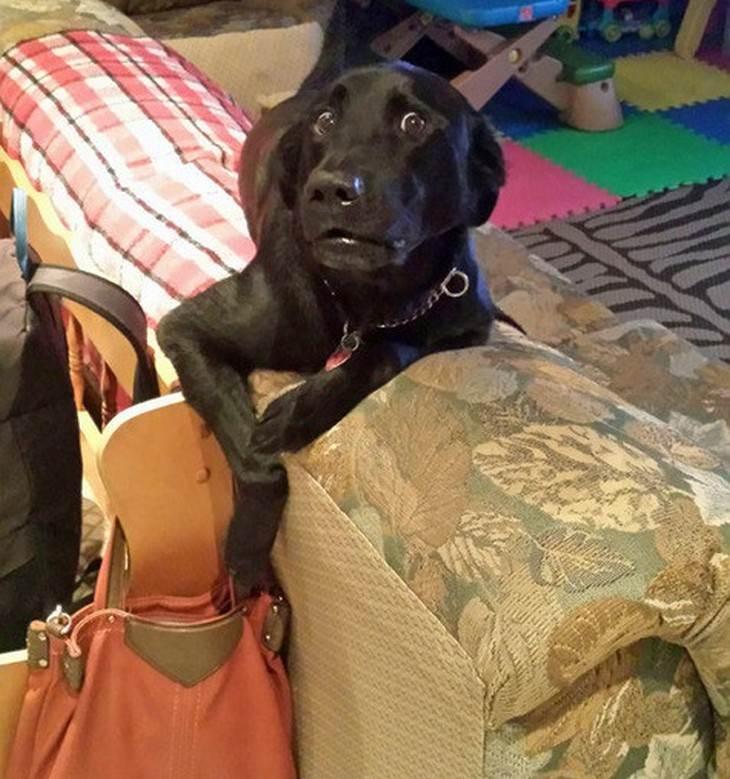 dog, funny, cheeky, mess