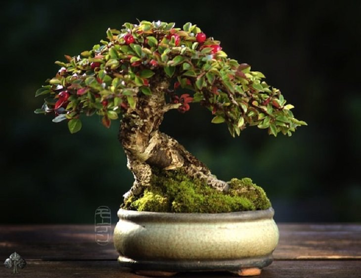 12 stunning and very rare bonsai trees nature babamail