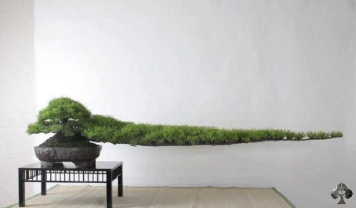 12 stunning and very rare bonsai trees nature babamail for Most expensive bonsai tree ever