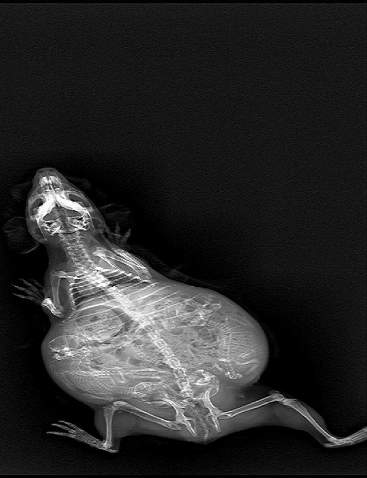 Animals - Photos - Pregnant - Babies