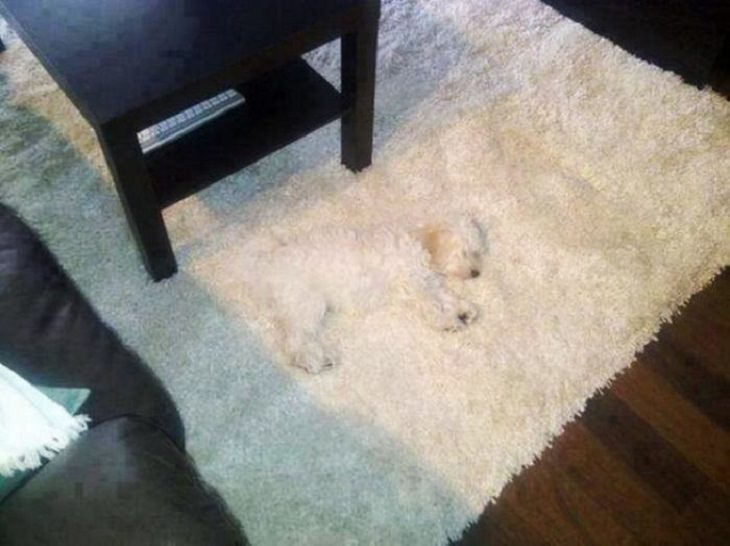 Dogs - Hiding - Funny - Cute