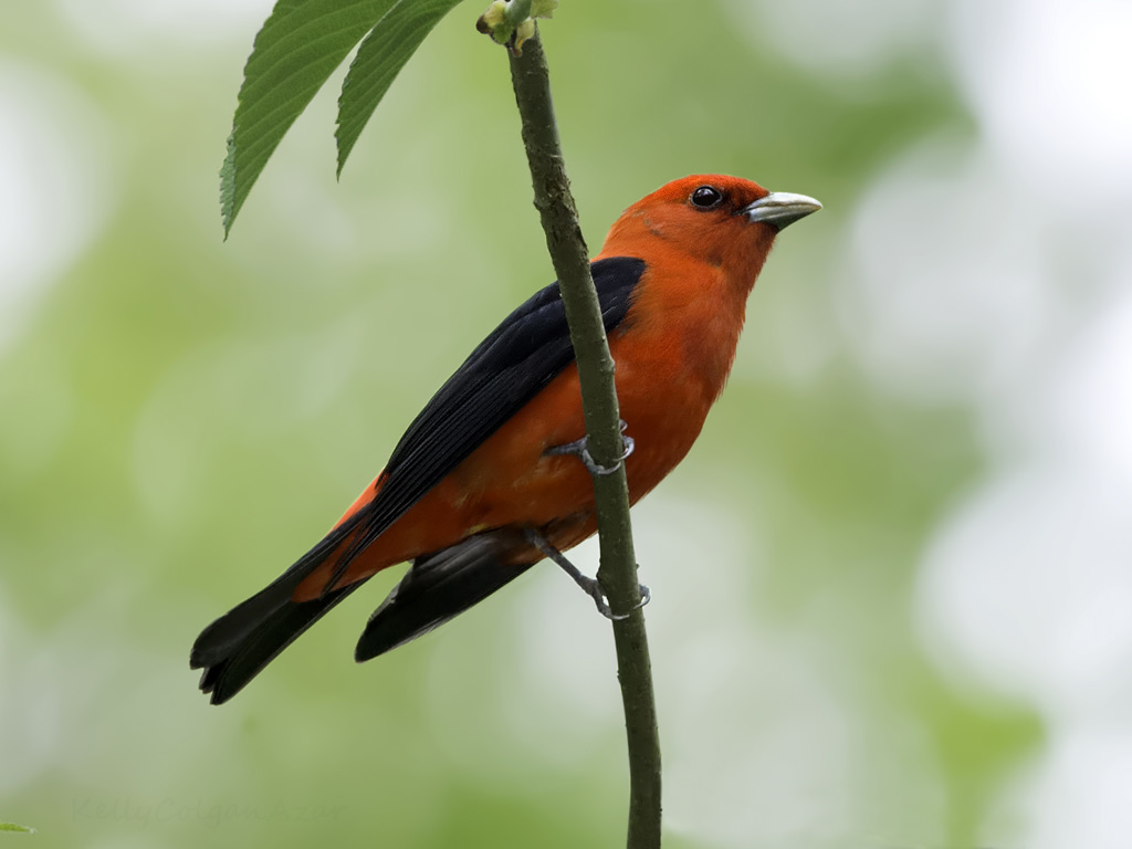 14 of the most colorful birds in the entire world nature babamail