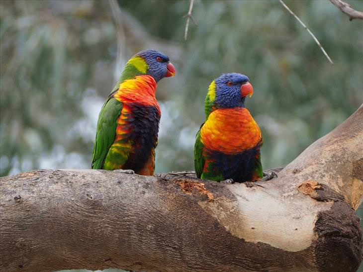 colorful-birds
