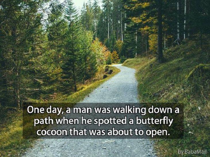 Butterflies - Life Story - Inspiring
