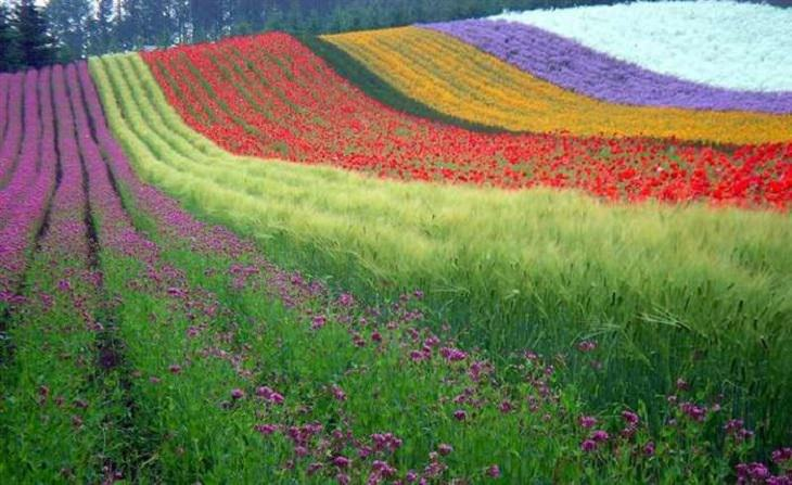 Photography - Colorful World