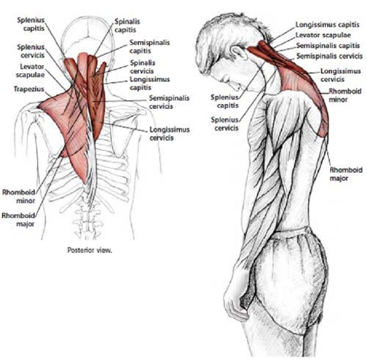 Neck And Shoulder Stretches To Reduce Tension Health Babamail