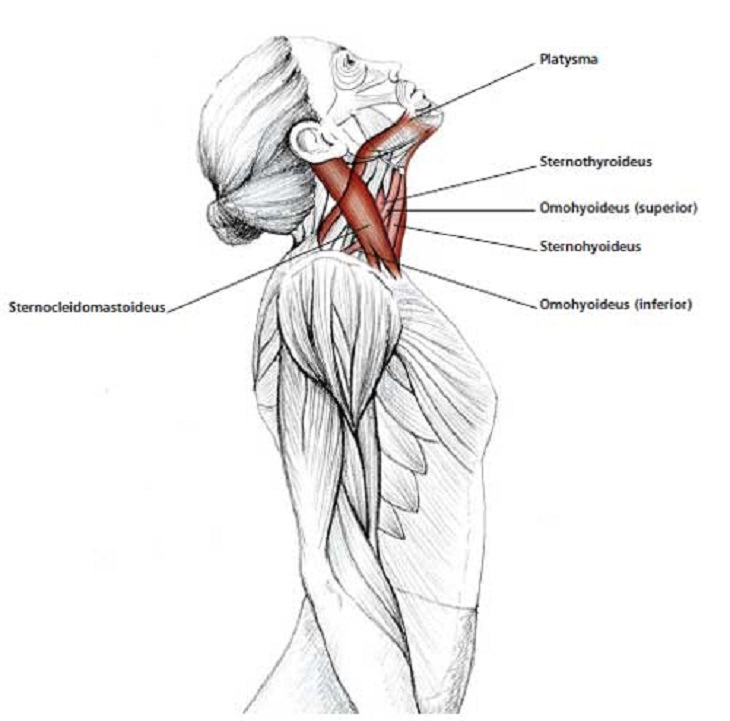 1743 0003 8 19 together with 8272492654 together with 5830984 further Content besides Stretching In The Office Neck Shoulder Upper Limb. on head extension