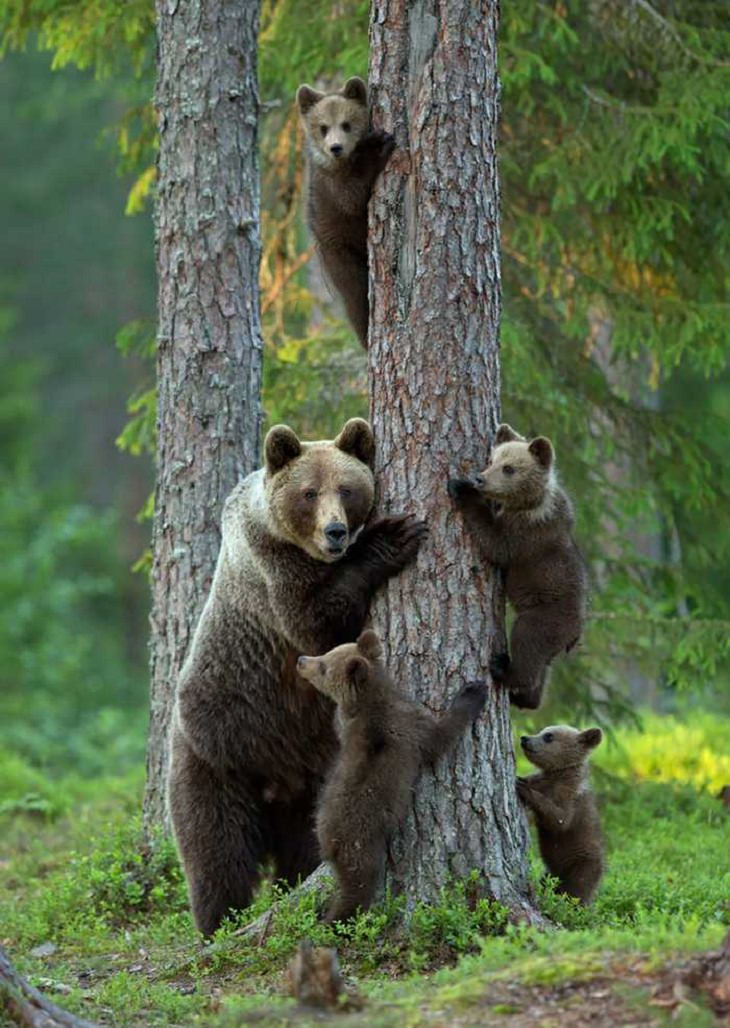 Animals - Families - Beautiful