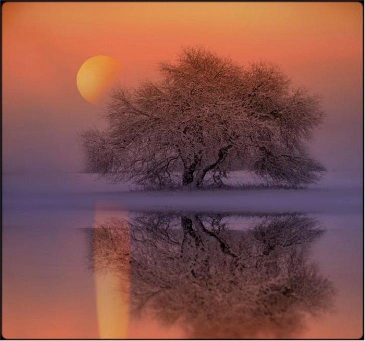 Nature - Surrealism - Photography