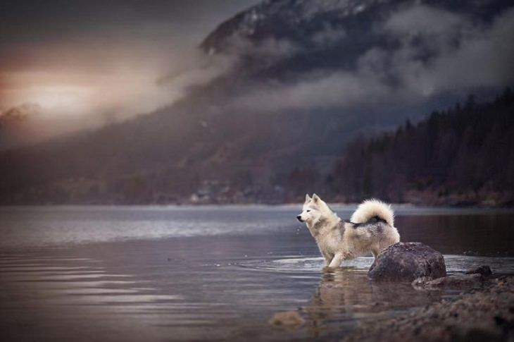 Dogs - Breathtaking - Photography