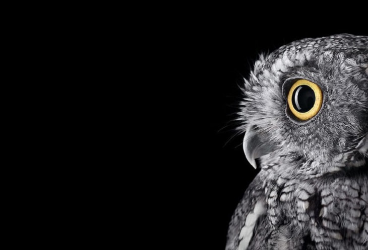 Owls - Impressive - Photography