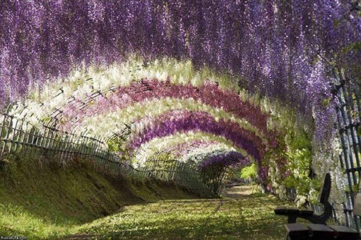 Flowers - Garden - Japan