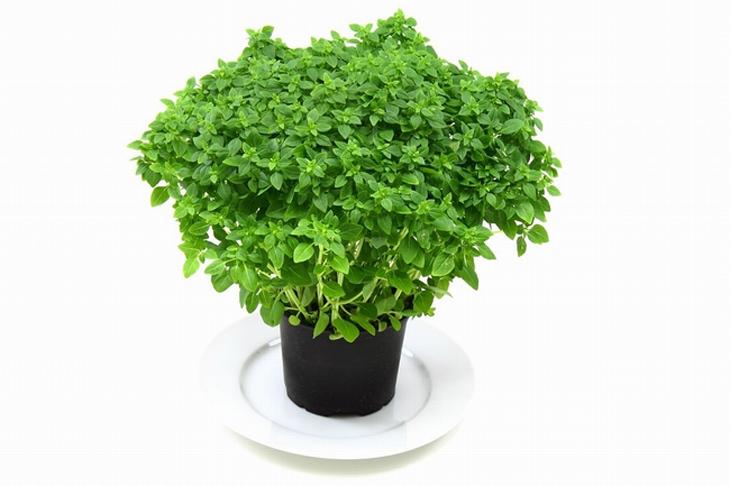 herbs-health