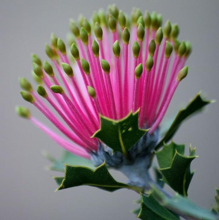 flowers, exotic, amazing