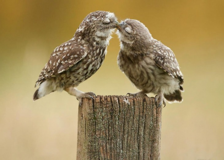 kissing-animals