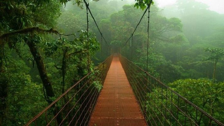 Amazing Sights - Amazon - Nature - South America