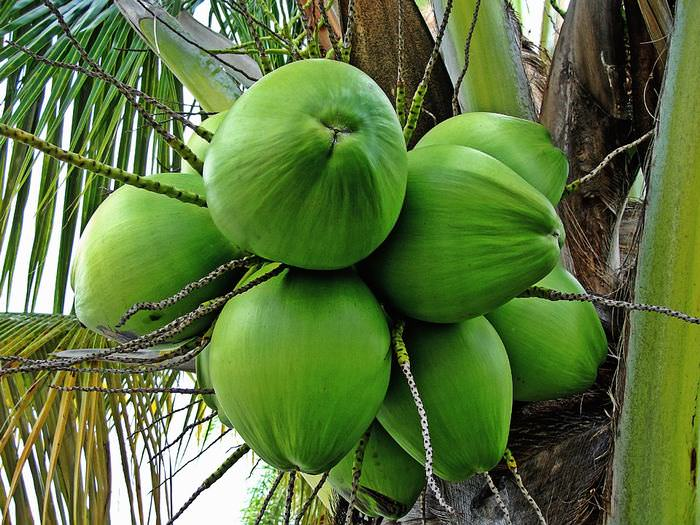 8 Reasons Why Coconut Water is Becoming Increasingly Popular