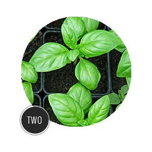 Bug Repellant Plants_TEMPORARY