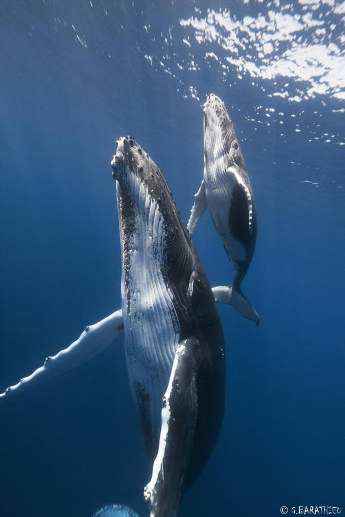 Whales Must Be the Most Majestic Creatures In the World