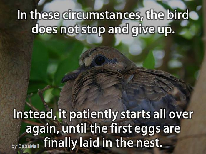 We Can All Learn a Thing or Two from a Bird's Life...