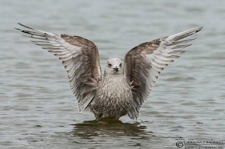 beautiful photos of  Birds