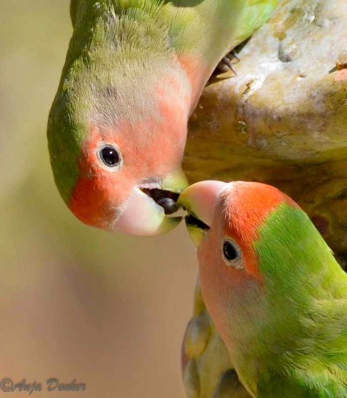 beautiful photos of  Birds